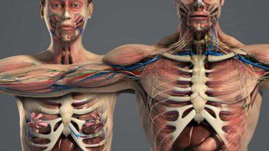 Photo of دانلود مدل سه بعدی آناتومی کامل زن و مرد از Turbosquid
