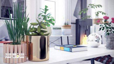 Photo of دانلود سی جی اکسیس شماره 111 CGAxis – گیاهان داخلی
