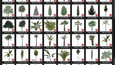 Photo of دانلود کالکشن مدل سه بعدی درخت برای اسکچاپ