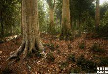 دانلود پکیج درختان برگ پهن بیوم برای آنریل انجین