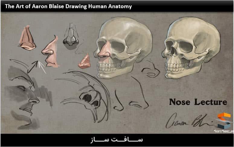آموزش آناتومی