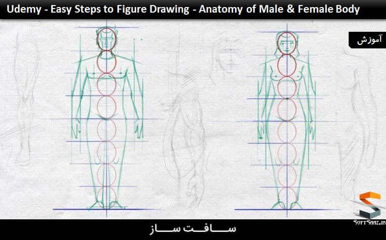 مراحل آسان ترسیم اشکال - anatomy بدن مرد و زن