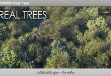 کتابخانه بسیار واقعی درختان